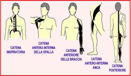 rieducazione posturale muscalre