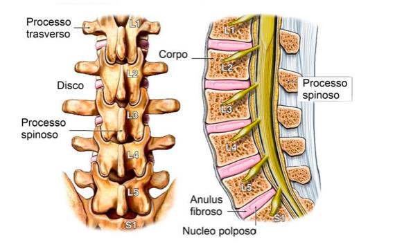 anatomia della colonna cosa cambia