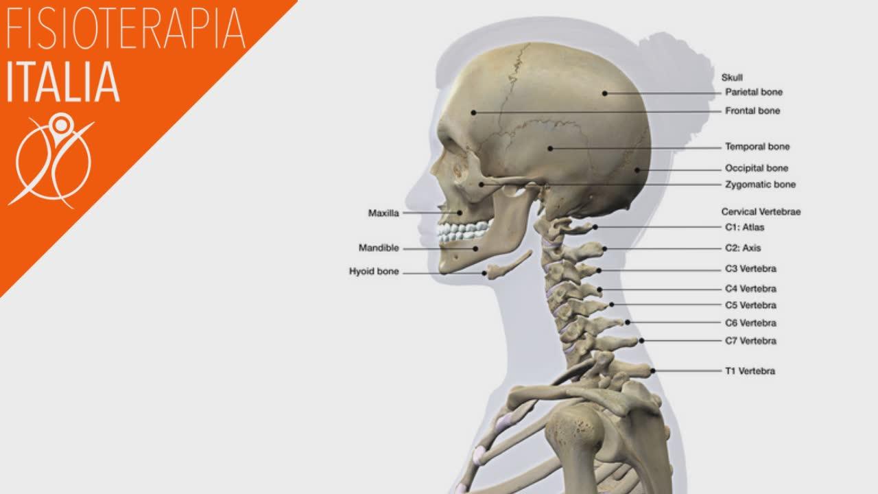 anatomia della cervicale e la sua fisiologia normale