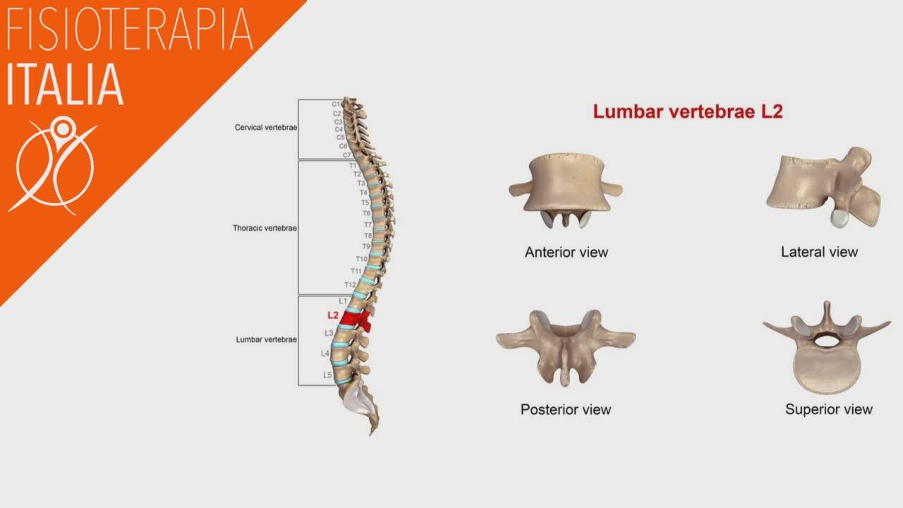 anatomia della colonna lombare
