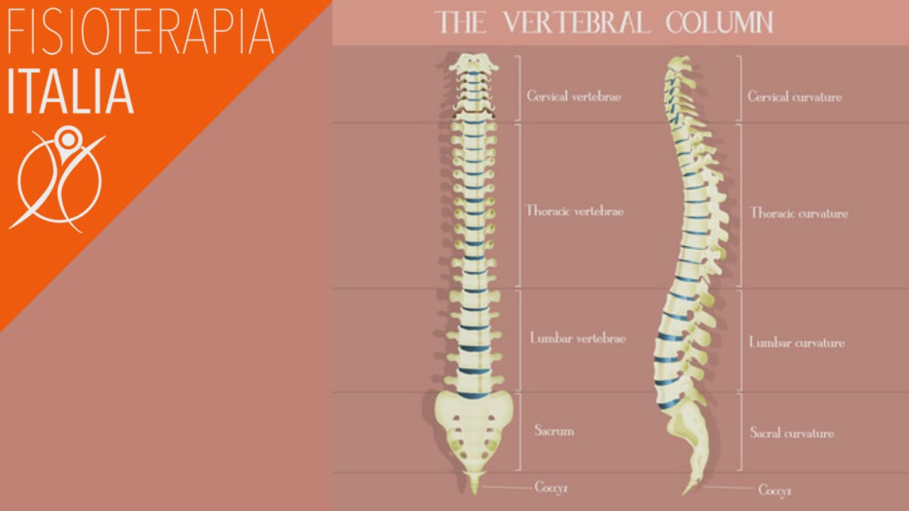 anatomia della colonna vertebrale