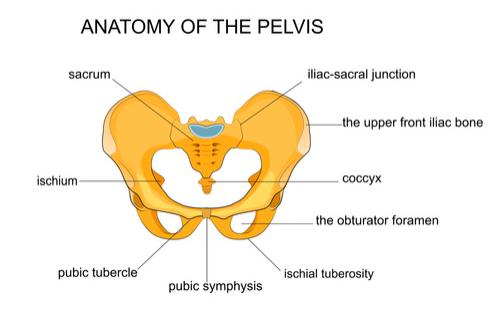 anatomia sacroiliaca