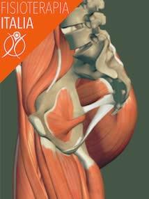 anca muscoli