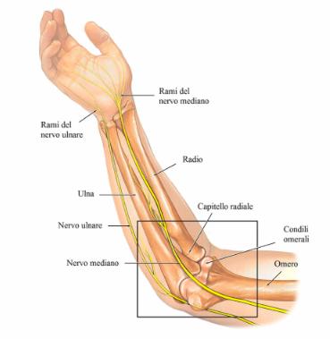 compressione nervo ulnare come avviene e cause