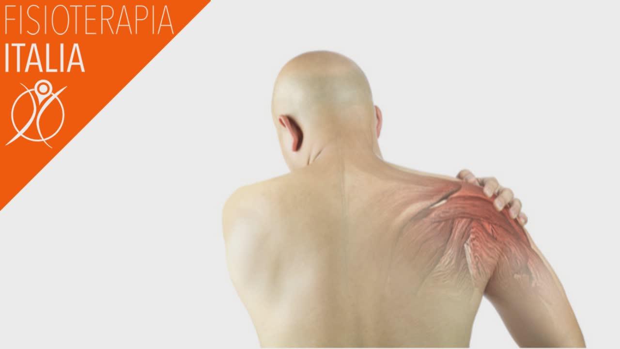 cuffia dei rotatori importanza dei muscoli della spalla