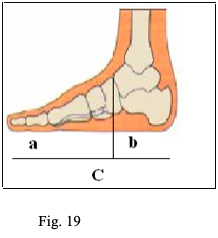 fig 19