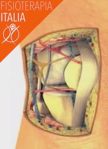 ginocchio nervi