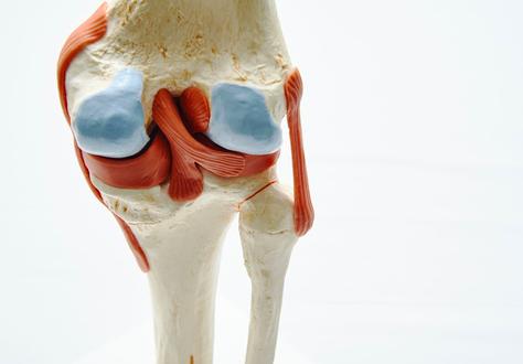 il ginocchio e la sua articolazione