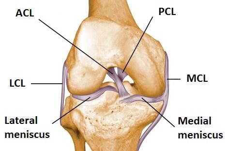 legamenti ginocchio