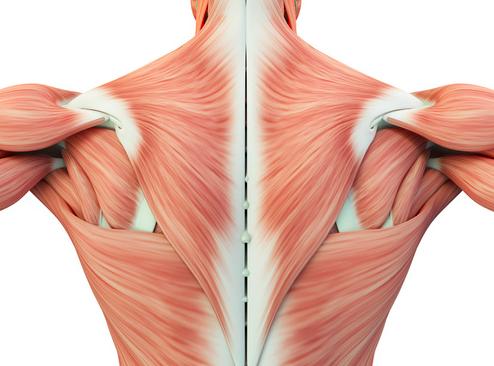 Dolore nella parte centrale della schiena le cause e i rimedi
