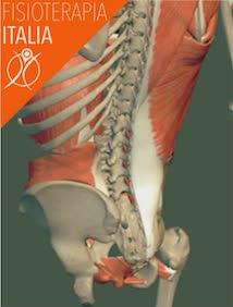 muscoli della lombare
