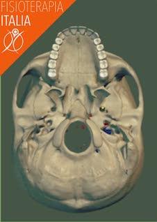 nervi del cranio