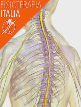 nervi dorsali