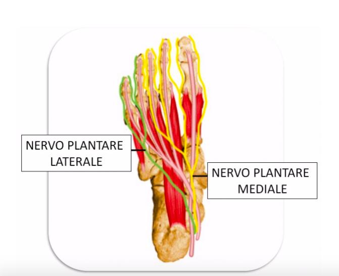 nervo intrappolato i rimedi fisioterapici