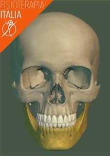 ossa cranio mandibola