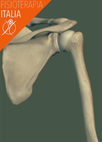 ossa spalla