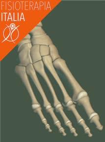 piede caviglia ossa