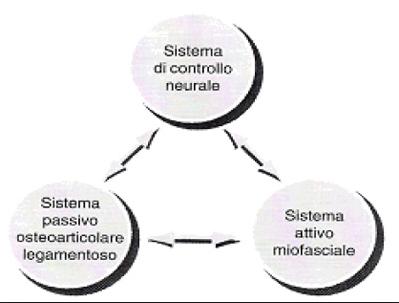 riabilitazione propriocettiva schema di panjabi