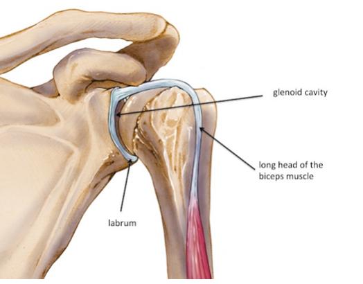 slap lesion fisioterapia