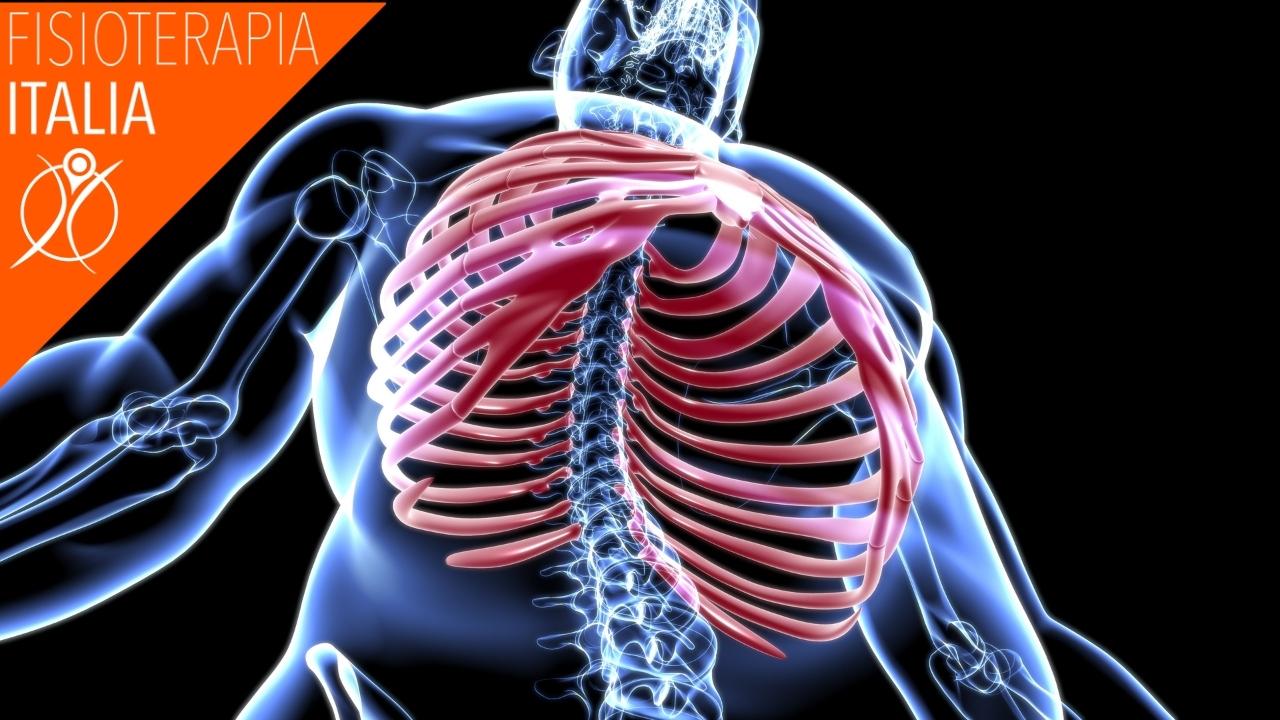 anatomia costole