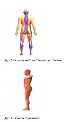 catena laterale e posteriore