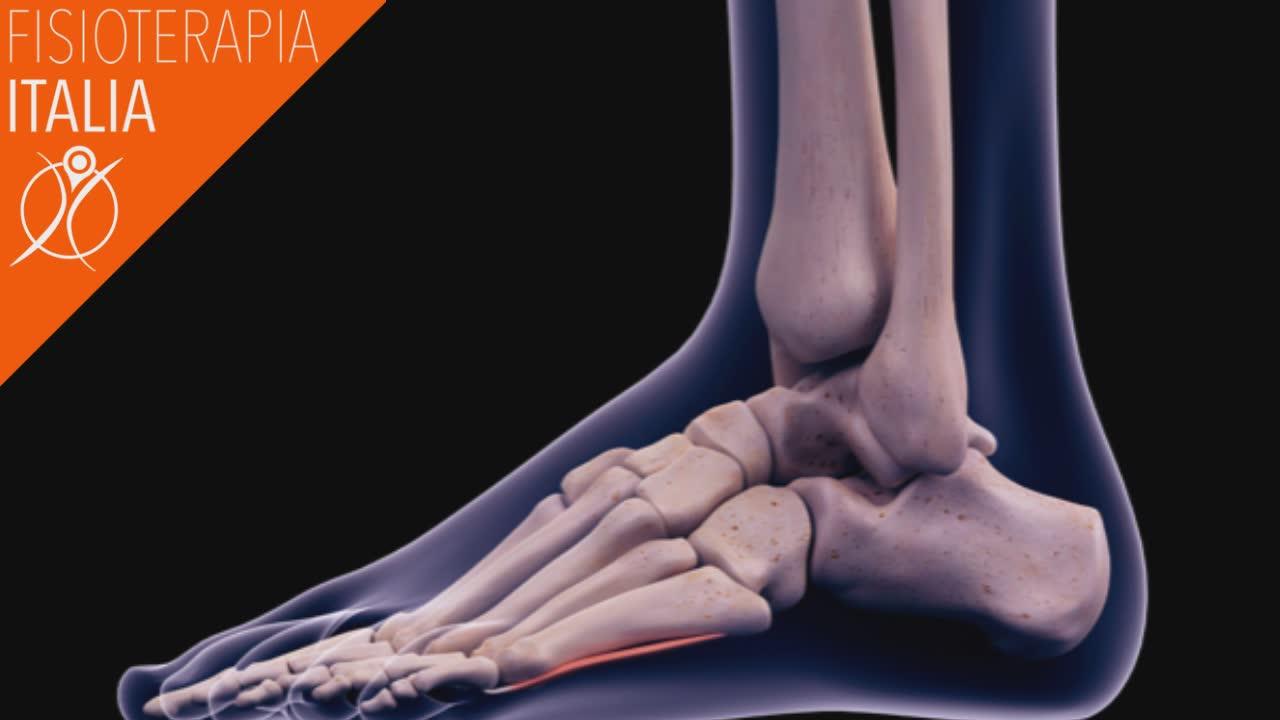 caviglia articolazione