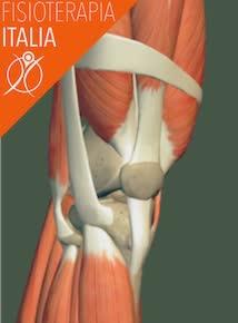 ginocchio muscoli