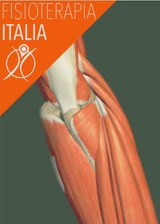 muscoli del gomito