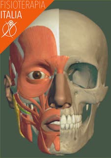muscoli della faccia