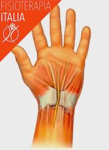 muscoli della mano