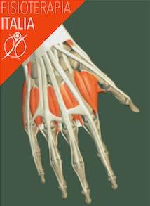 nervi della mano
