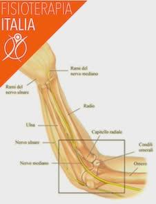 nervi del gomito