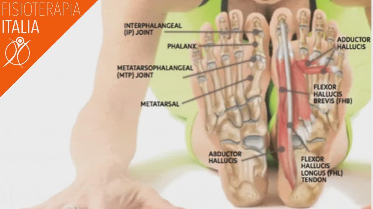 ossa e muscoli del piede