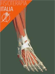 piede caviglia muscoli