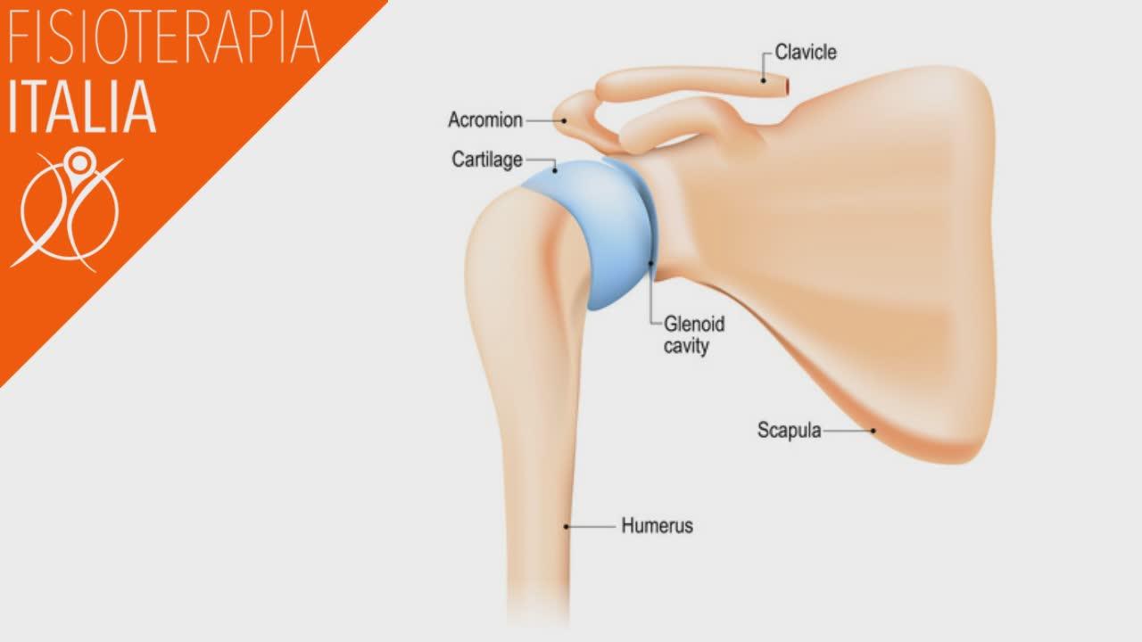 spalla anatomia