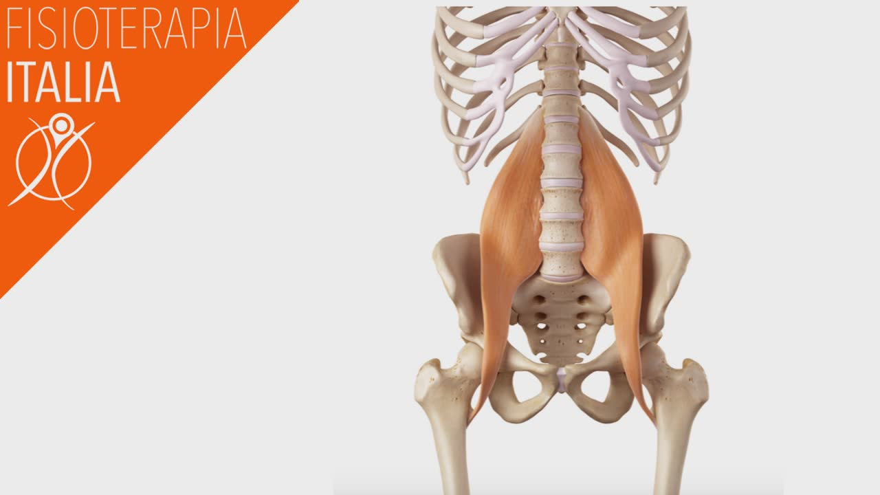 Contratture e Spasmi muscolari