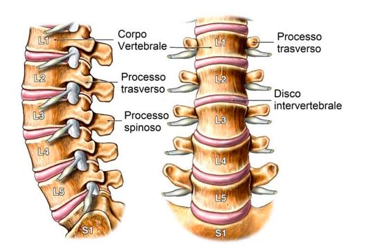 spondiloartrosi come si modificano i dischi vertebrali